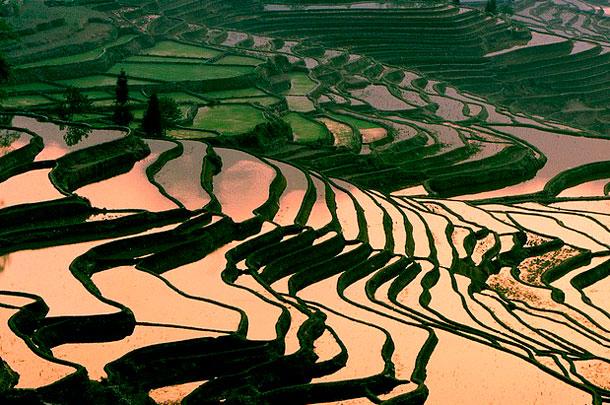 Террасы Юньнань