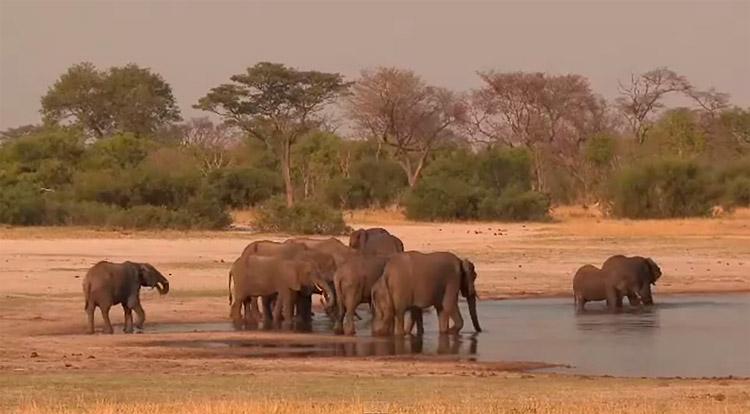 safari-v-afrike