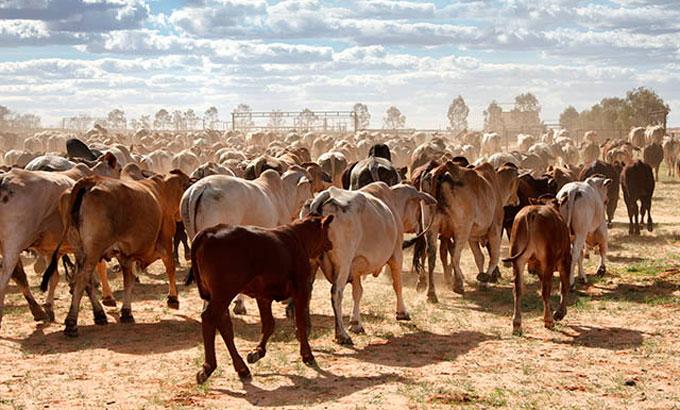 Самое большое ранчо