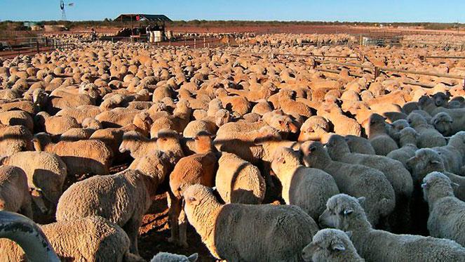 ferma-ovec
