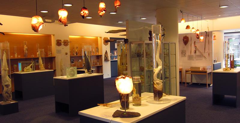 muzej-penisov