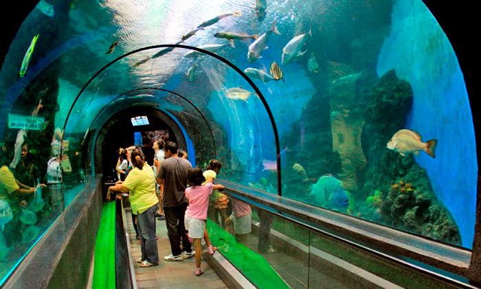akvarium-pxuketa