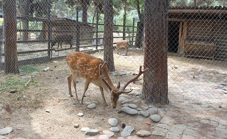 zoopark-tbilisi