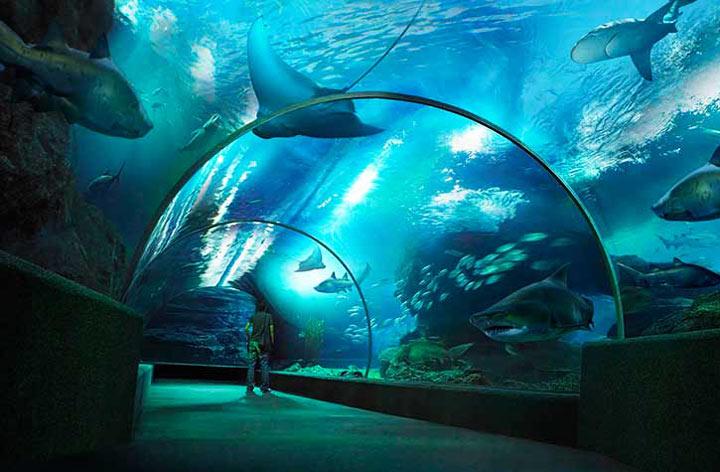 Достопримечательности Паттайи: Underwater World Pattaya