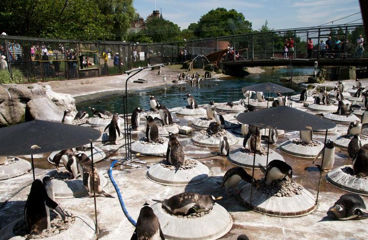 edinburhskii-zoopark