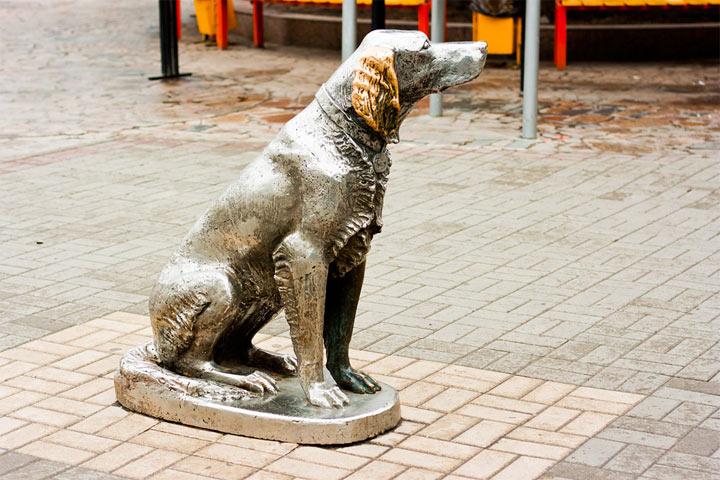 Куда сходить в Воронеже: Памятник Белому Биму