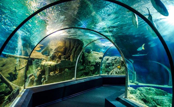 Куда сходить в городе Сочи: Океанариум