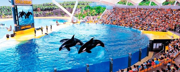 Шоу дельфинов, Тенерифе