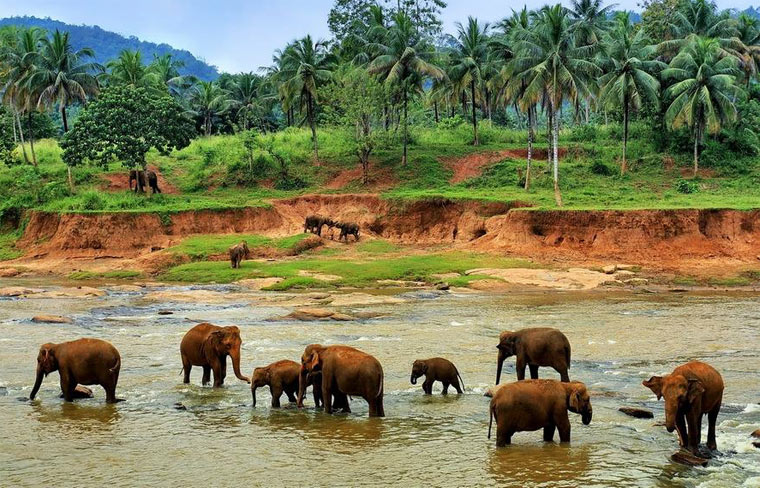 Достопримечательности Шри-Ланки: 13 лучших мест