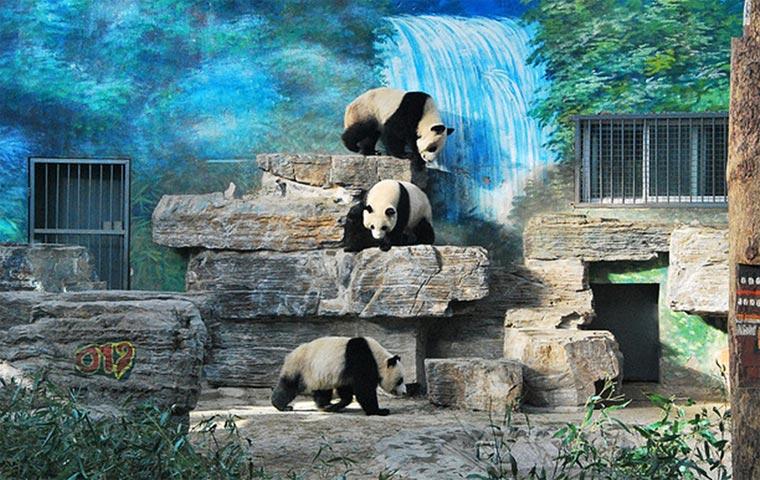 Достопримечательности Китая: Пекинский зоопарк
