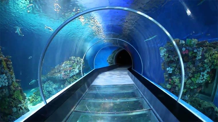 Достопримечательности Шарджи: аквариум