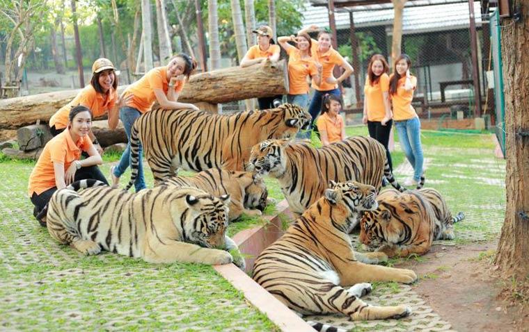 korolevstvo-tigrov