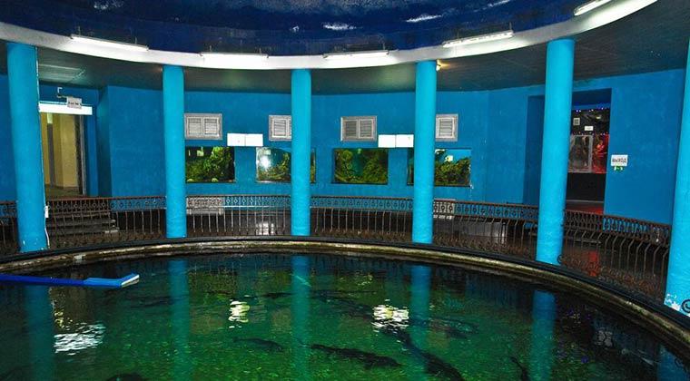 morskoj-akvarium-muzej