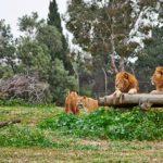 zoologicheskij-centr-safari-v-ramat-gane