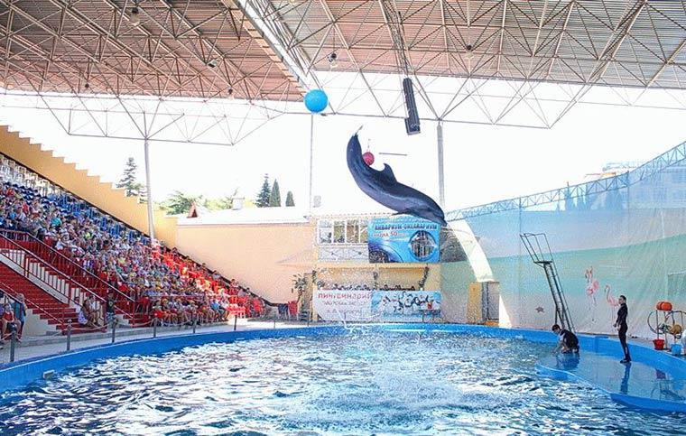 delfinarij-morskaya-zvezda
