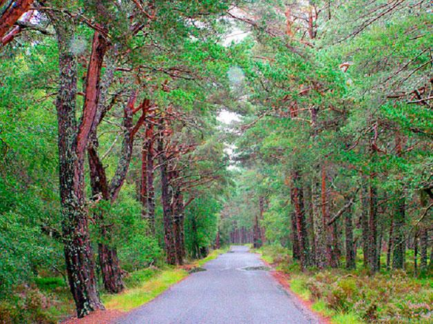 nacionalnyj-park-cairngorms