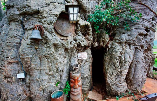 sunland-baobab-bar