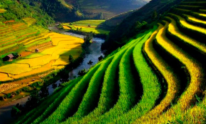 risovye-terrasy-yunnan