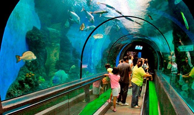 akvarium-pxuket