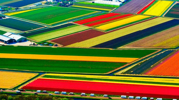 одно из красивейшие мест в мире: Поля тюльпанов