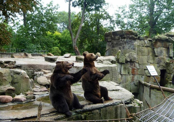 zoopark-kaliningrad