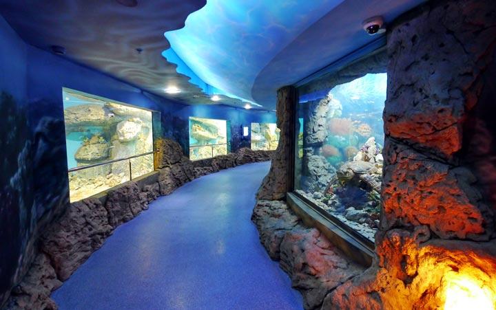 Лучшие достопримечательности Геленджика: океанариум