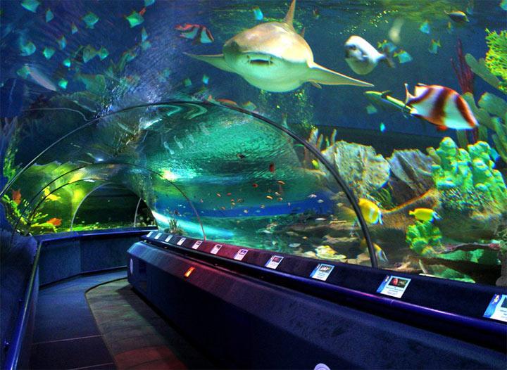 peterburgskiy-okeanarium