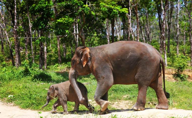 ubizhishche-slonov