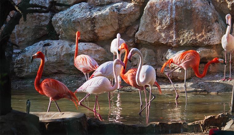 park-ptic